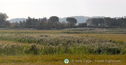 Arles countryside