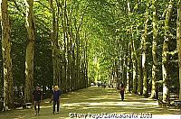 Grand avenue leading to Chateau Chenonceau [Chateaux Country - The Loire - France]