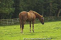 Tully continued as the British National Stud until 1943