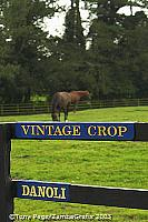 Vintage Crop won the Melbourne Cup in 1993